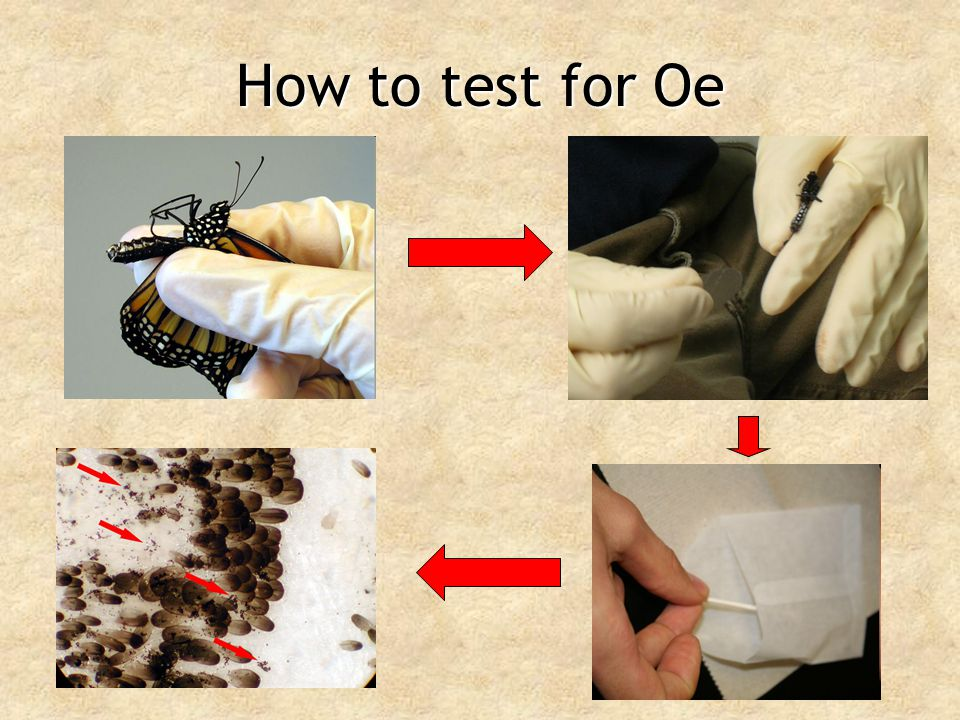 How to test for Oe