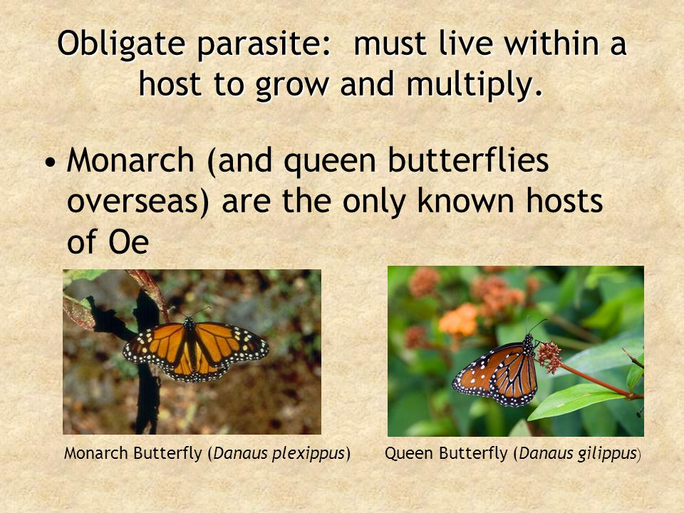 Obligate parasite: must live within a host to grow and multiply.