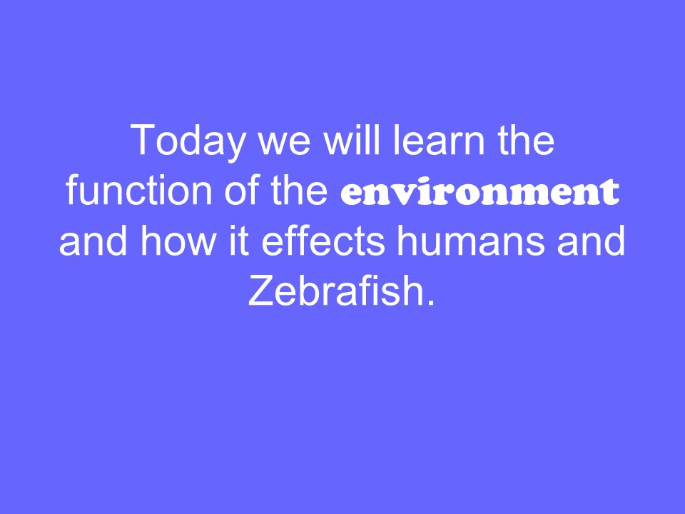 Today we will learn the function of the environment and how it effects humans and Zebrafish.