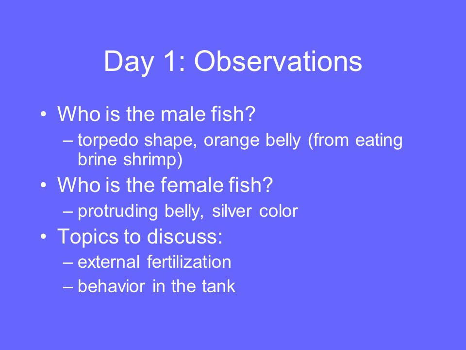Day 1: Observations Who is the male fish Who is the female fish