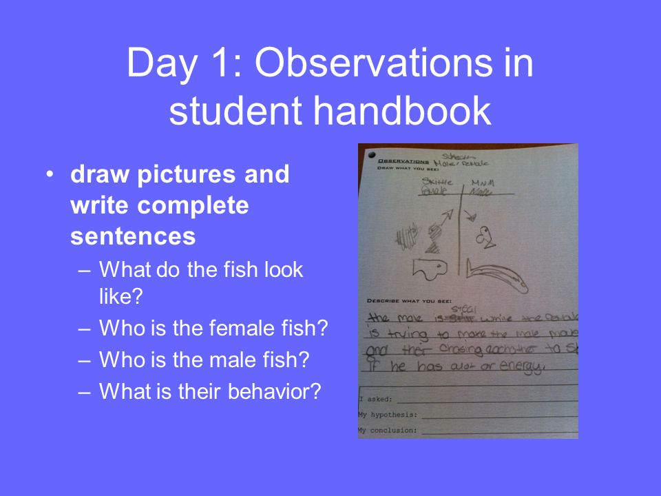 Day 1: Observations in student handbook