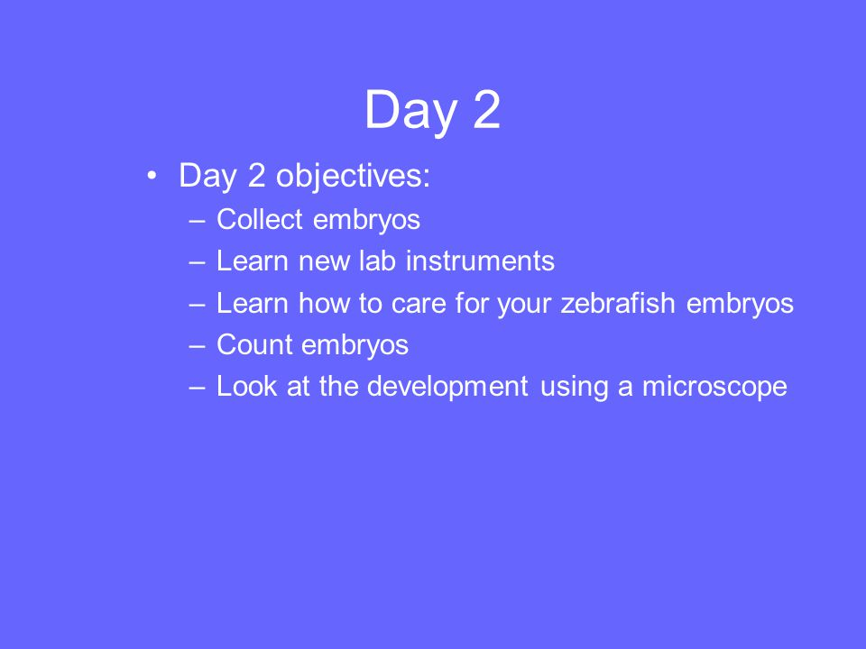 Day 2 Day 2 objectives: Collect embryos Learn new lab instruments