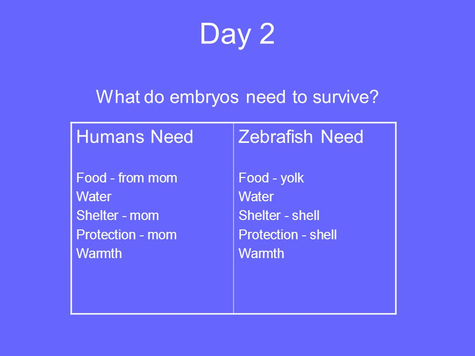 Day 2 What do embryos need to survive