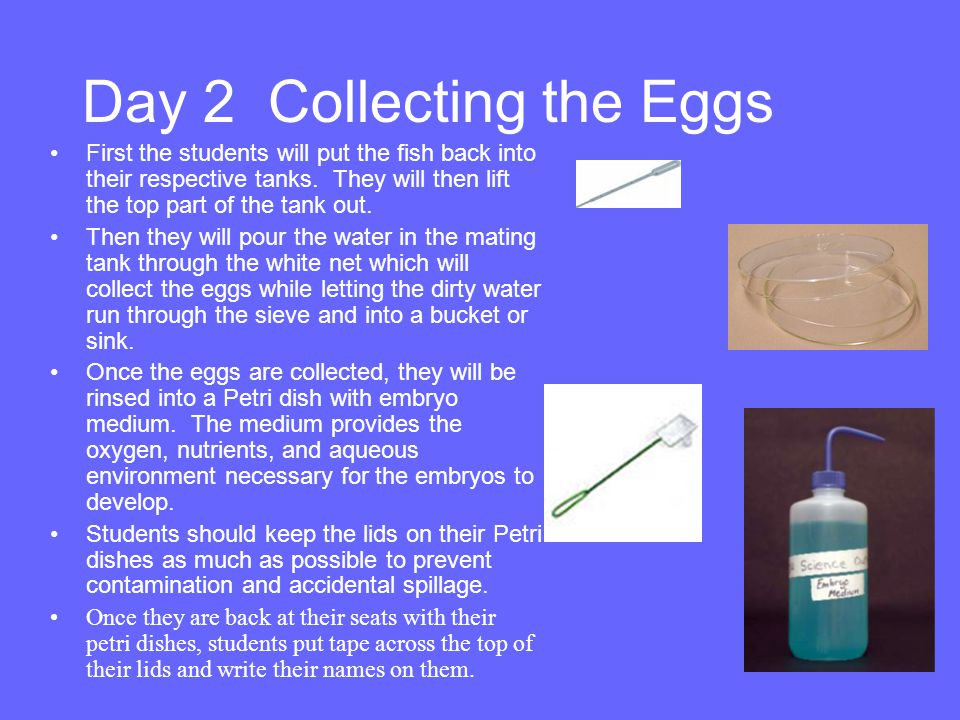 Day 2 Collecting the Eggs
