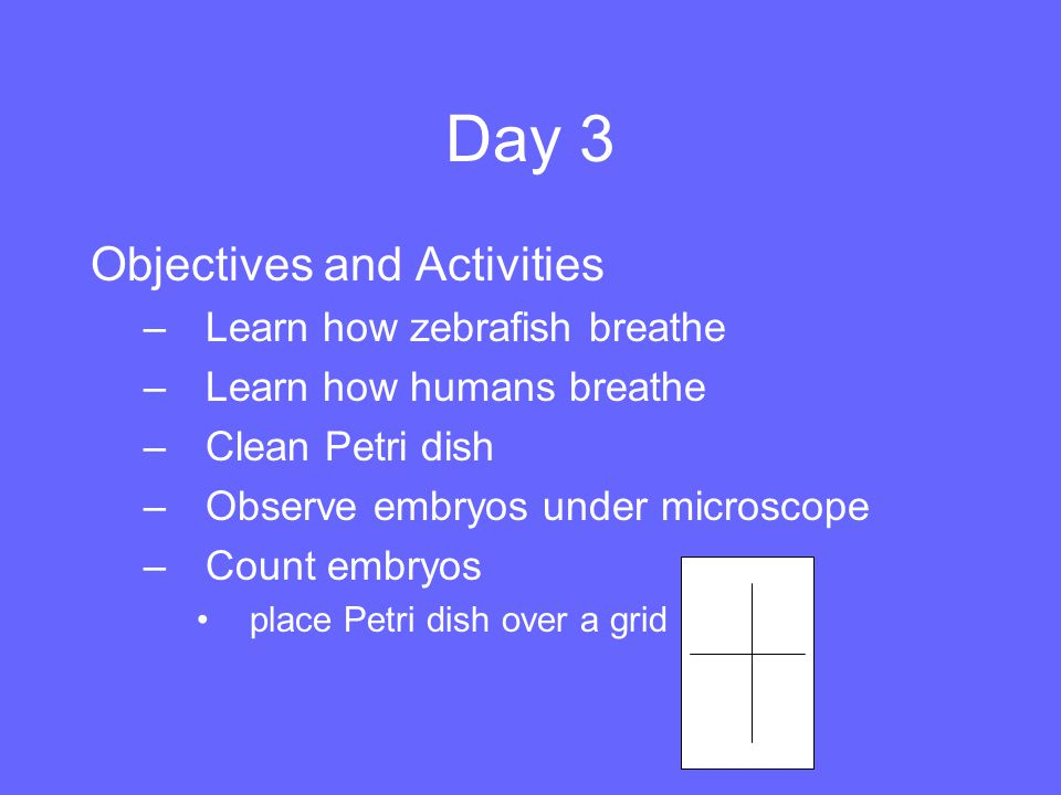 Day 3 Objectives and Activities Learn how zebrafish breathe