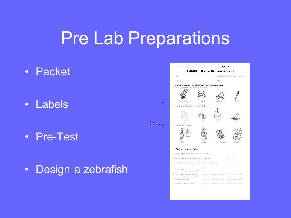Pre Lab Preparations Packet Labels Pre-Test Design a zebrafish