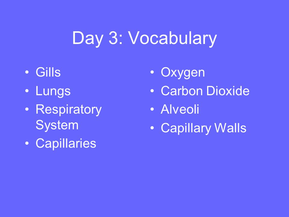 Day 3: Vocabulary Gills Lungs Respiratory System Capillaries Oxygen