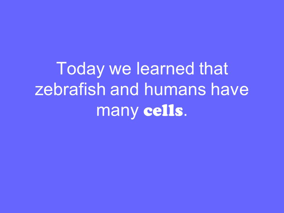 Today we learned that zebrafish and humans have many cells.