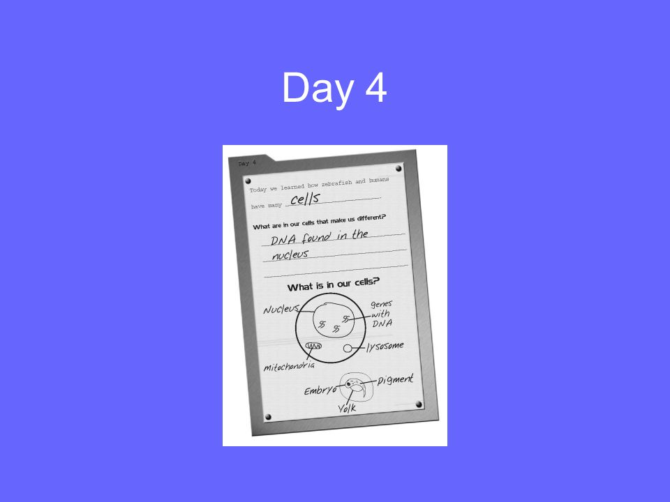 Day 4 Be sure that your students are keeping up on their handbooks.