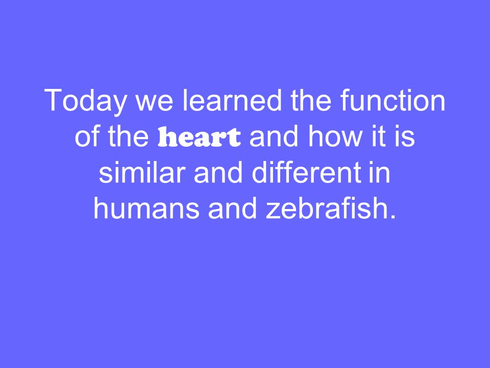 Today we learned the function of the heart and how it is similar and different in humans and zebrafish.