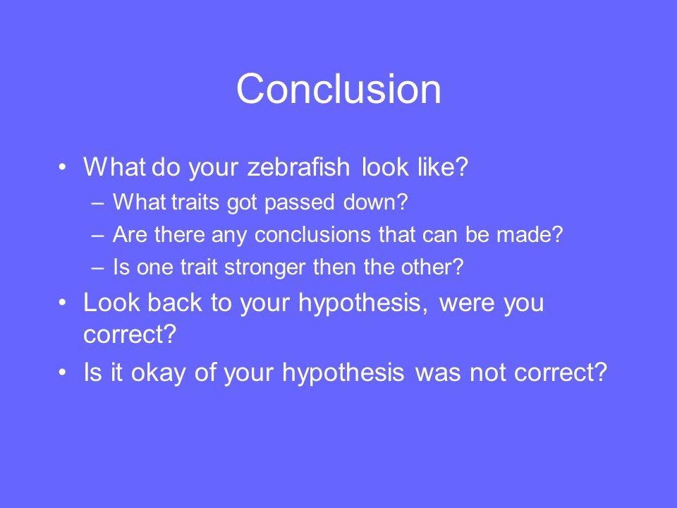 Conclusion What do your zebrafish look like