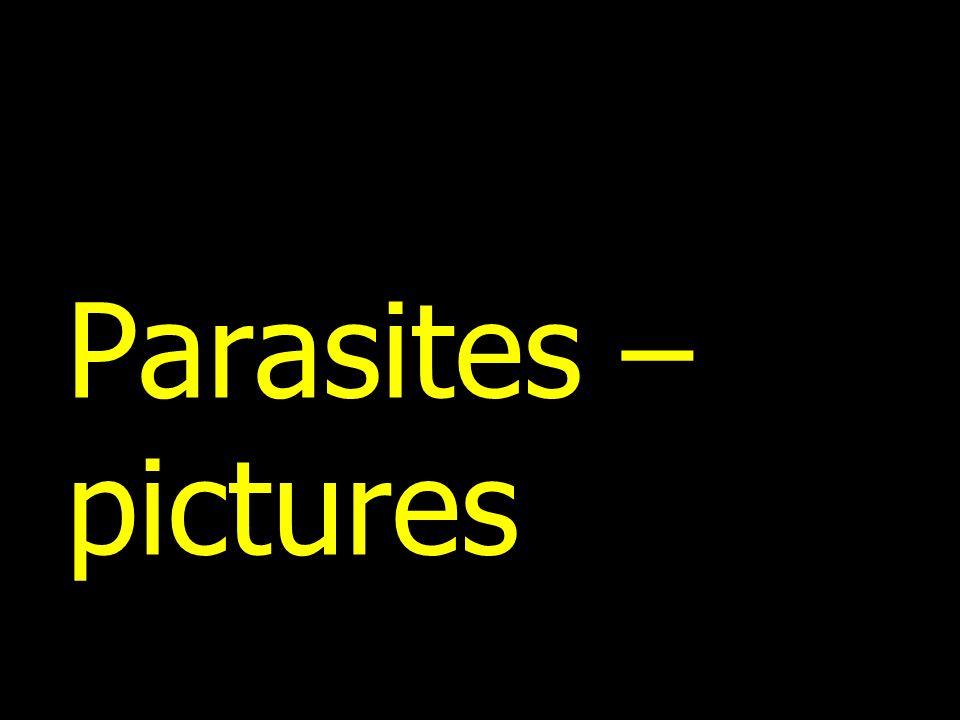 Parasites – pictures