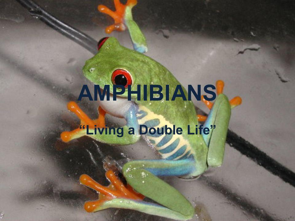 AMPHIBIANS Living a Double Life