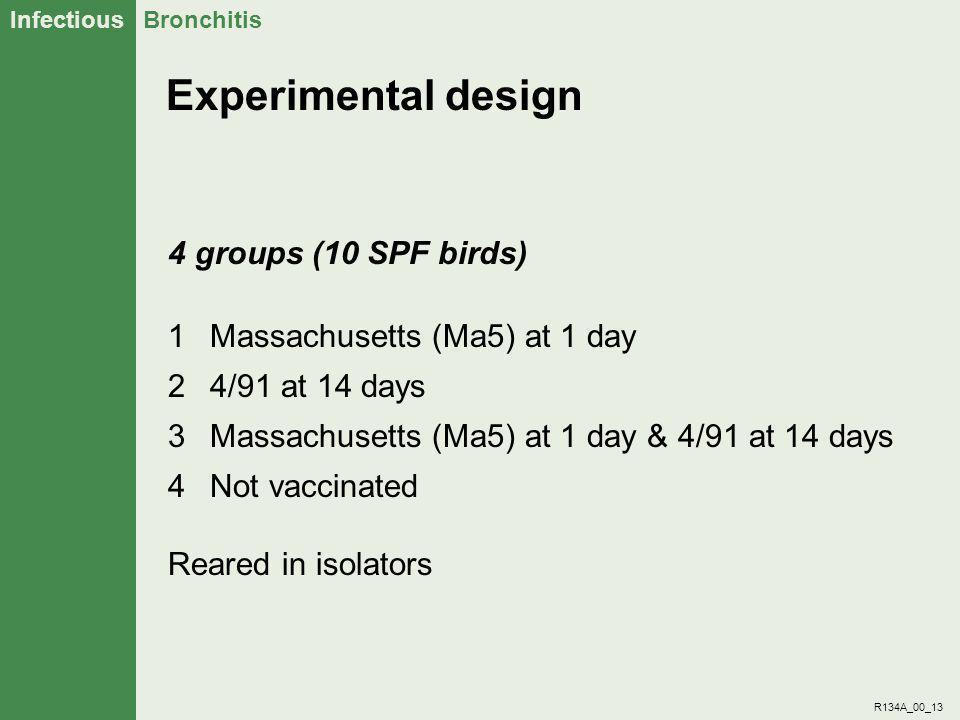 Experimental design 4 groups (10 SPF birds)