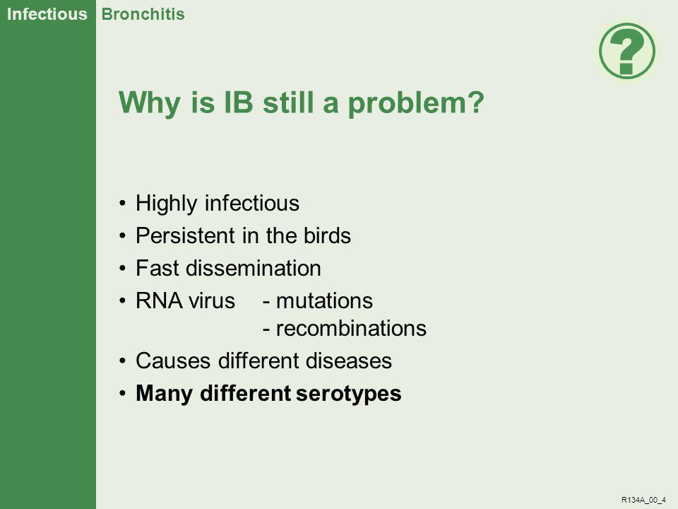 Why is IB still a problem Highly infectious Persistent in the birds
