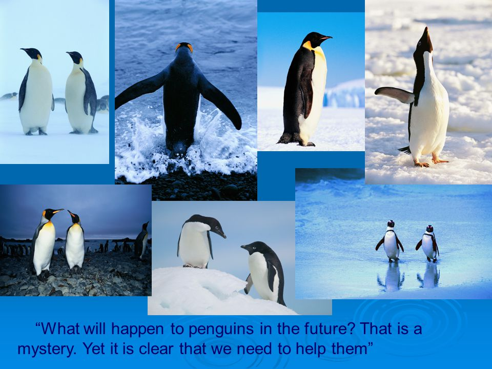 What will happen to penguins in the future. That is a mystery
