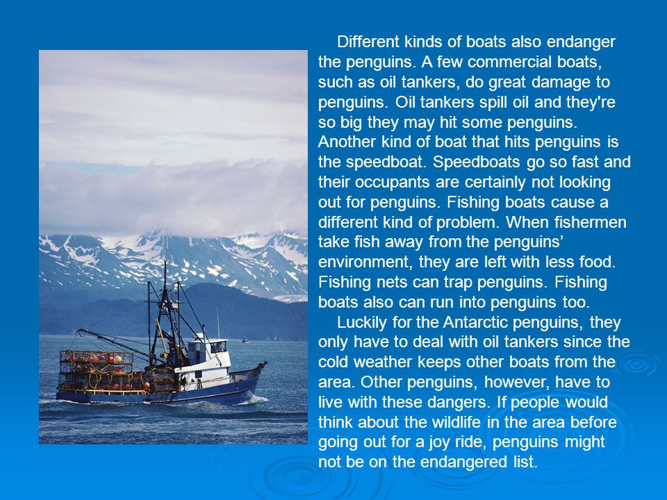 Different kinds of boats also endanger the penguins