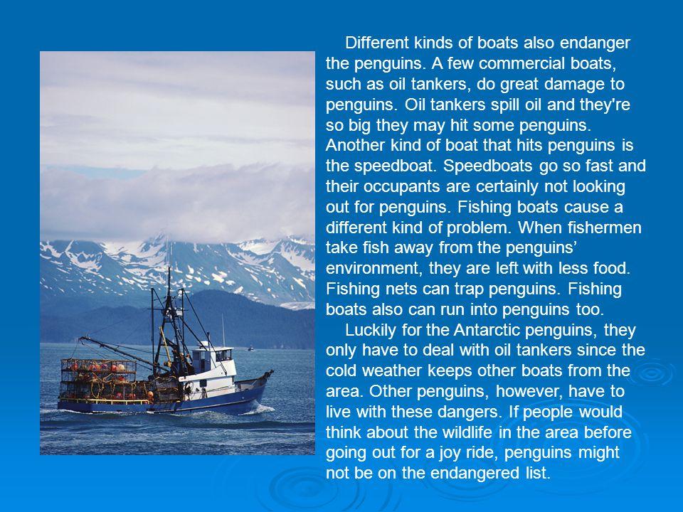 Different kinds of boats also endanger the penguins