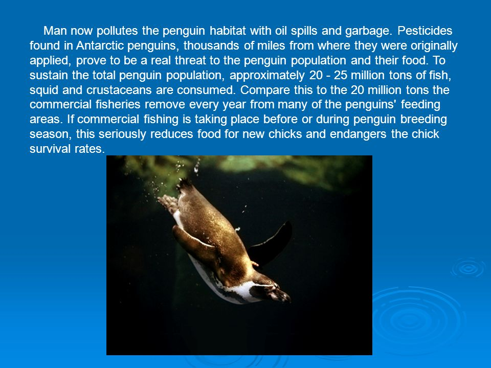 Man now pollutes the penguin habitat with oil spills and garbage
