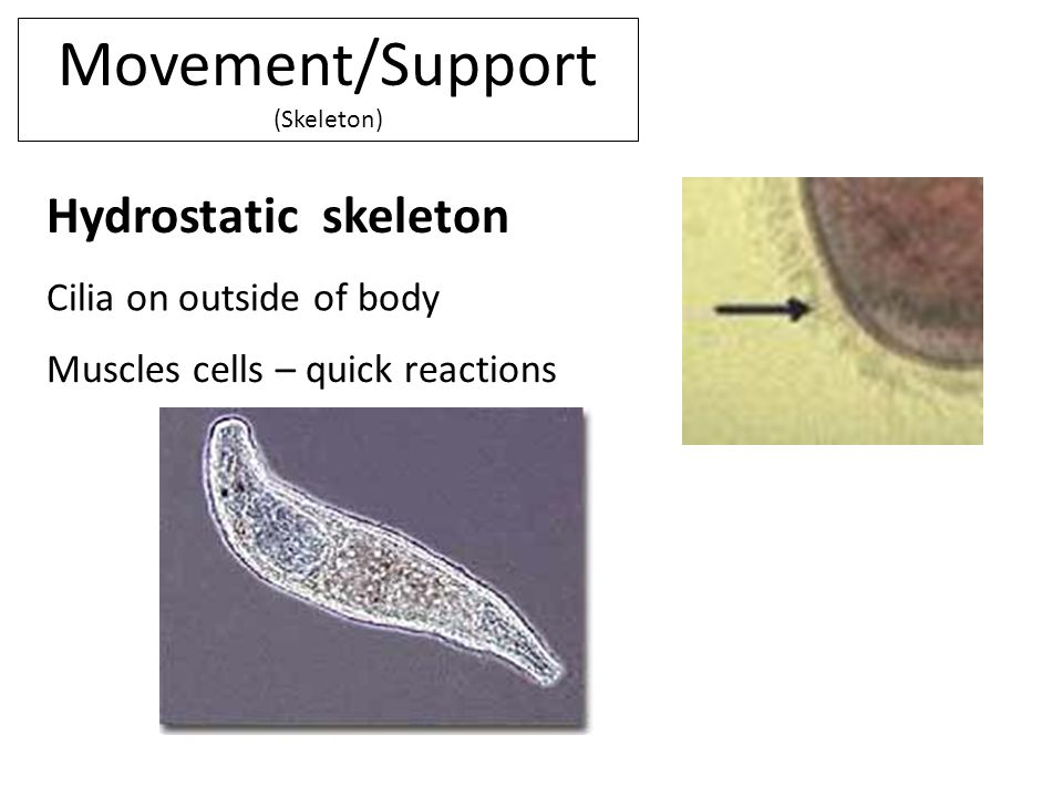 Movement/Support (Skeleton)