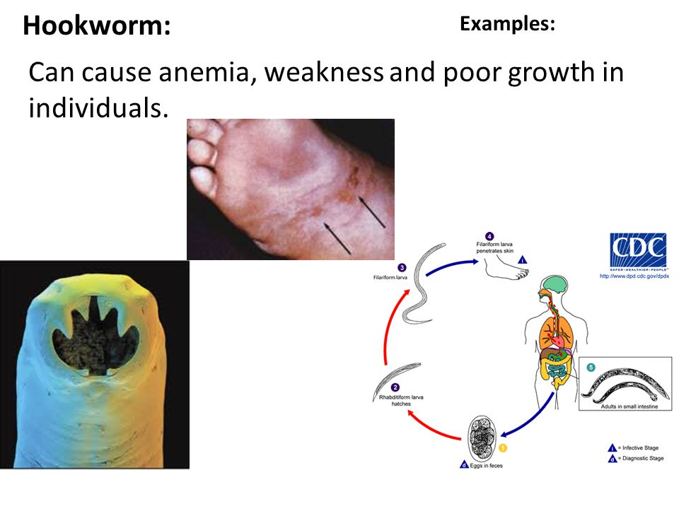 Can cause anemia, weakness and poor growth in individuals.