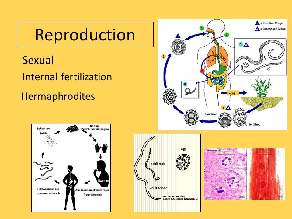 Reproduction Sexual Internal fertilization Hermaphrodites
