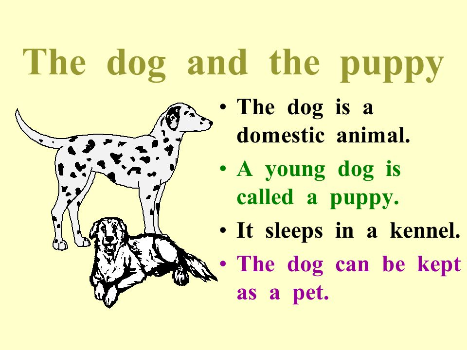 The dog and the puppy The dog is a domestic animal.