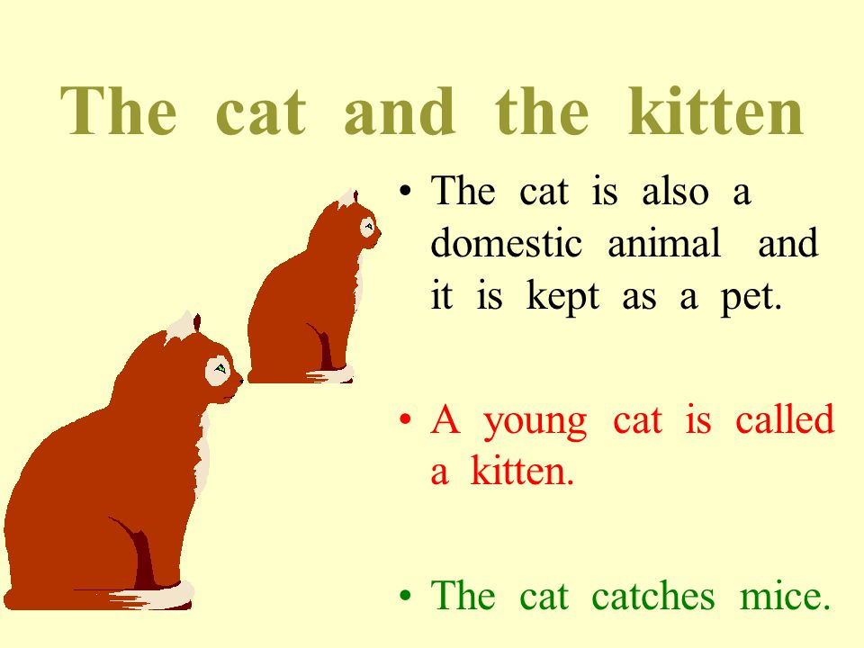 The cat and the kitten The cat is also a domestic animal and it is kept as a pet.