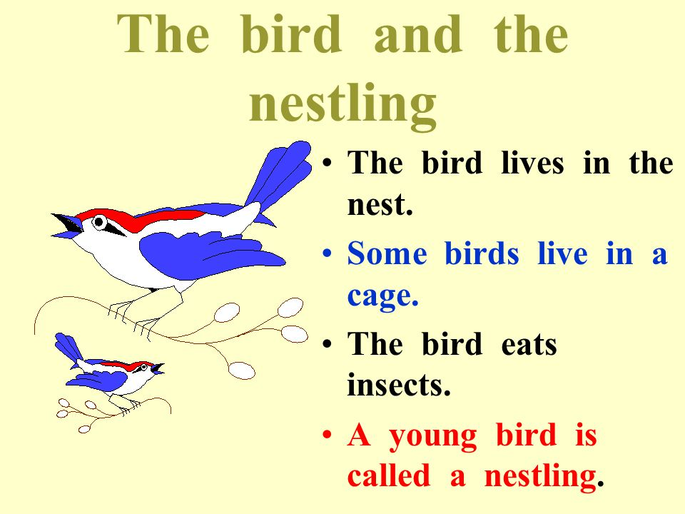 The bird and the nestling