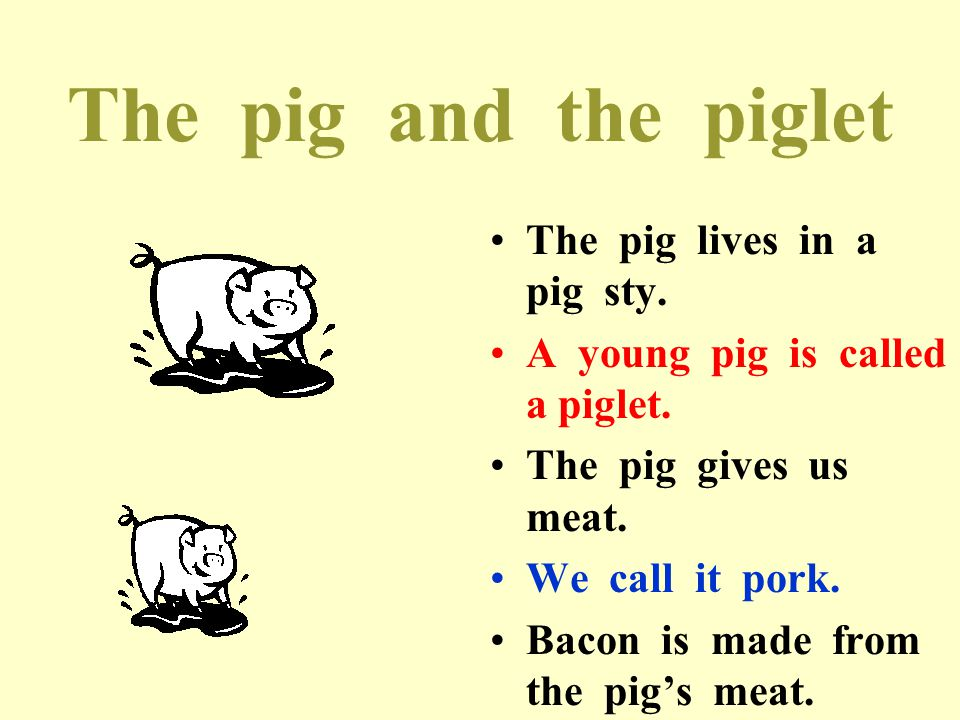 The pig and the piglet The pig lives in a pig sty.