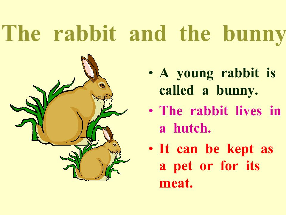 The rabbit and the bunny