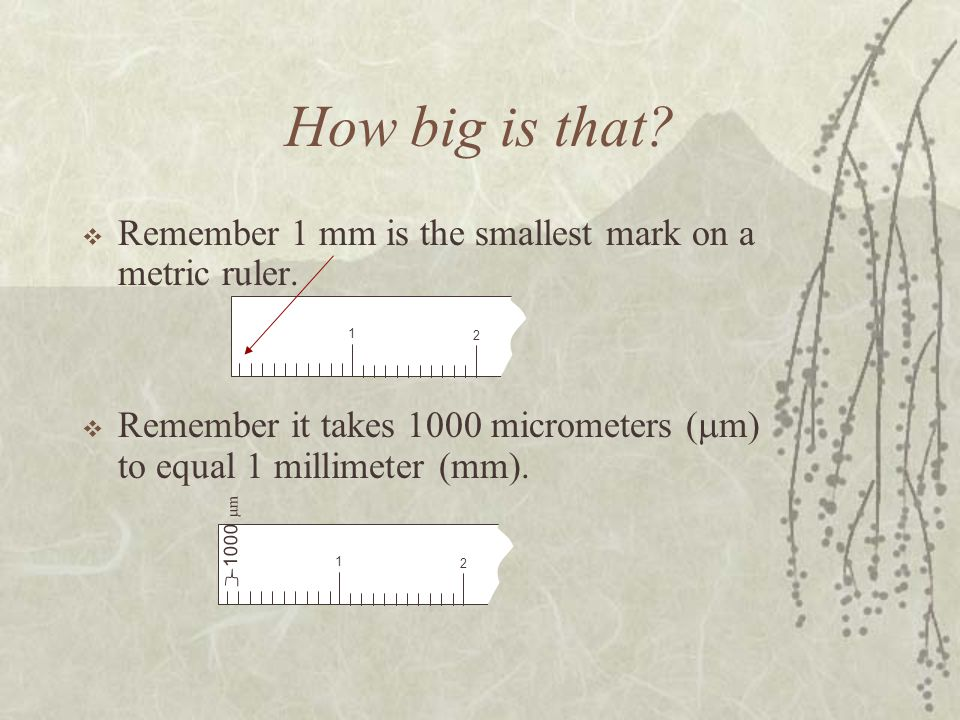 How big is that Remember 1 mm is the smallest mark on a metric ruler.