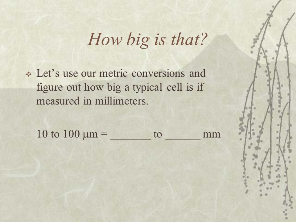 How big is that Let's use our metric conversions and figure out how big a typical cell is if measured in millimeters.