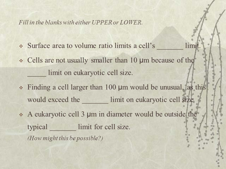 Surface area to volume ratio limits a cell's _______ limit.
