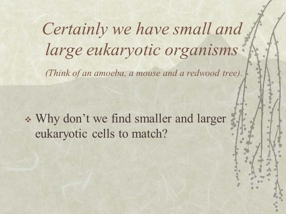 Certainly we have small and large eukaryotic organisms (Think of an amoeba, a mouse and a redwood tree).