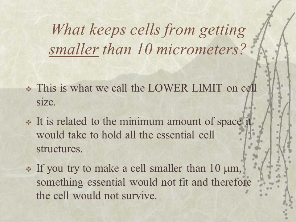 What keeps cells from getting smaller than 10 micrometers