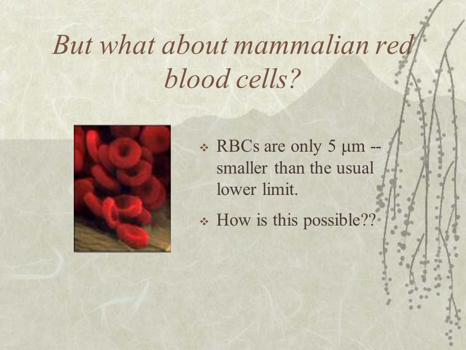 But what about mammalian red blood cells