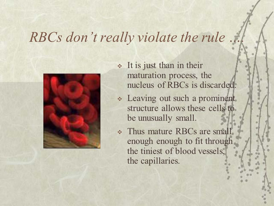 RBCs don't really violate the rule ….