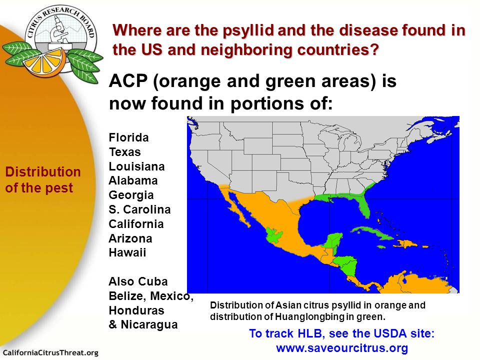 To track HLB, see the USDA site: www.saveourcitrus.org