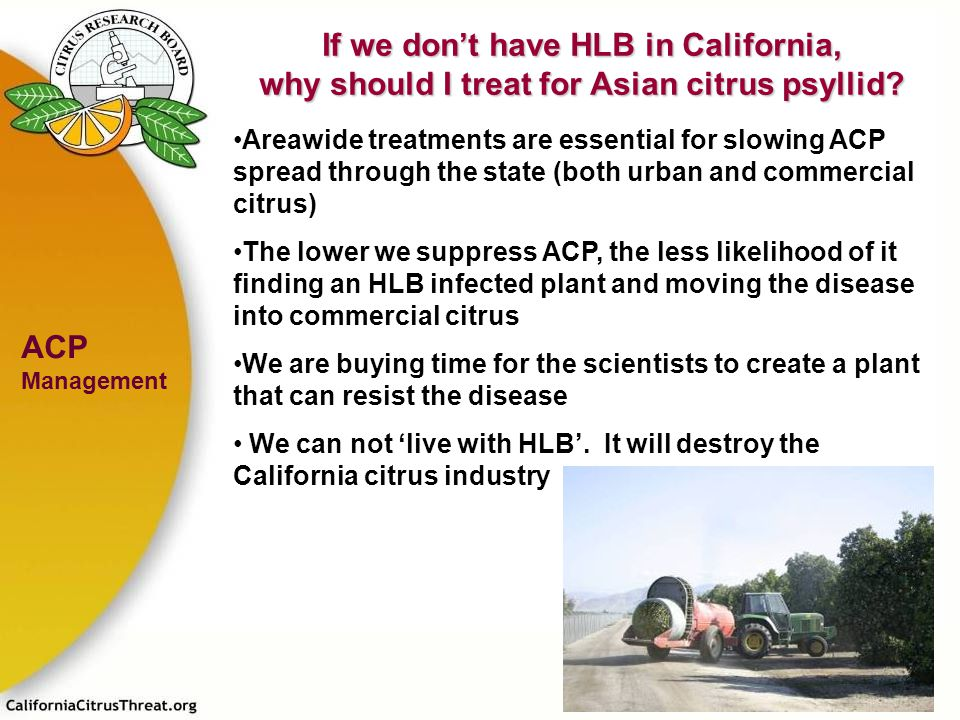 If we don't have HLB in California, why should I treat for Asian citrus psyllid