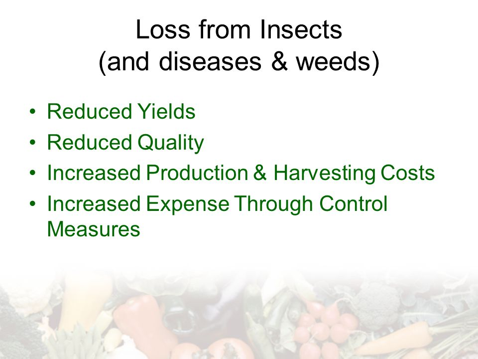 Loss from Insects (and diseases & weeds)