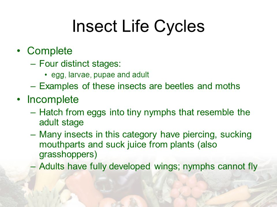 Insect Life Cycles Complete Incomplete Four distinct stages: