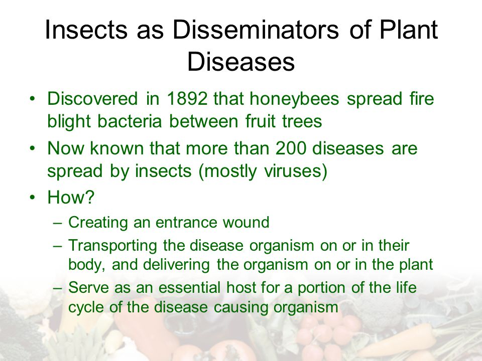 Insects as Disseminators of Plant Diseases