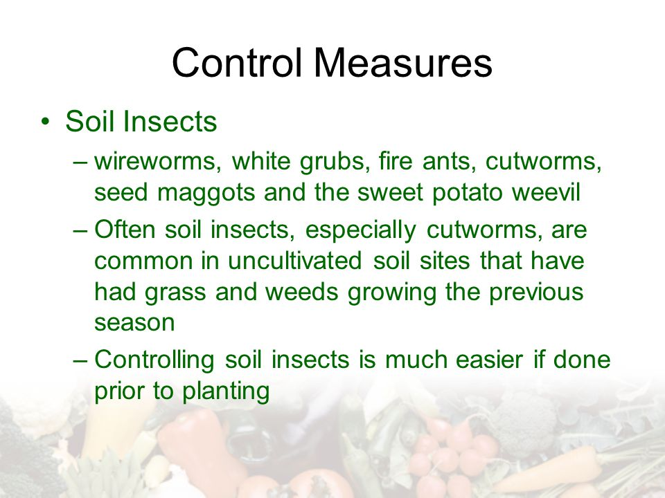 Control Measures Soil Insects