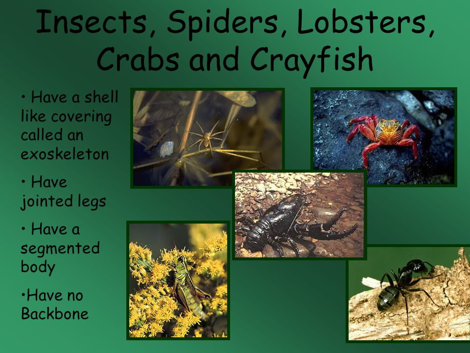 Insects, Spiders, Lobsters, Crabs and Crayfish