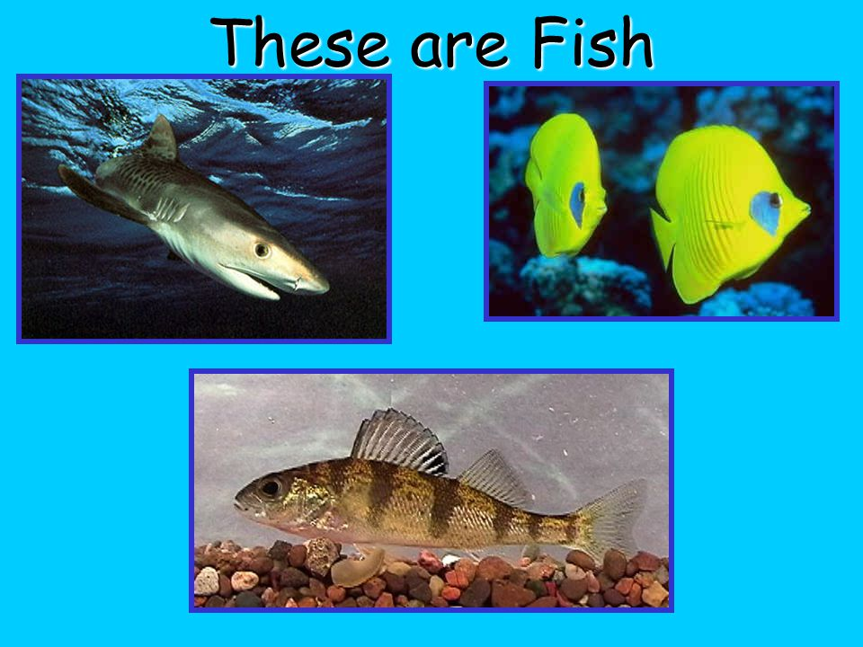 These are Fish