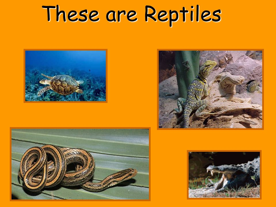 These are Reptiles