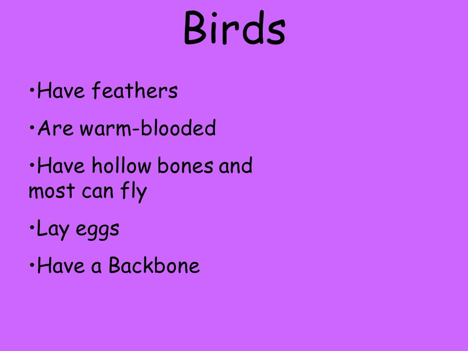 Birds Have feathers Are warm-blooded