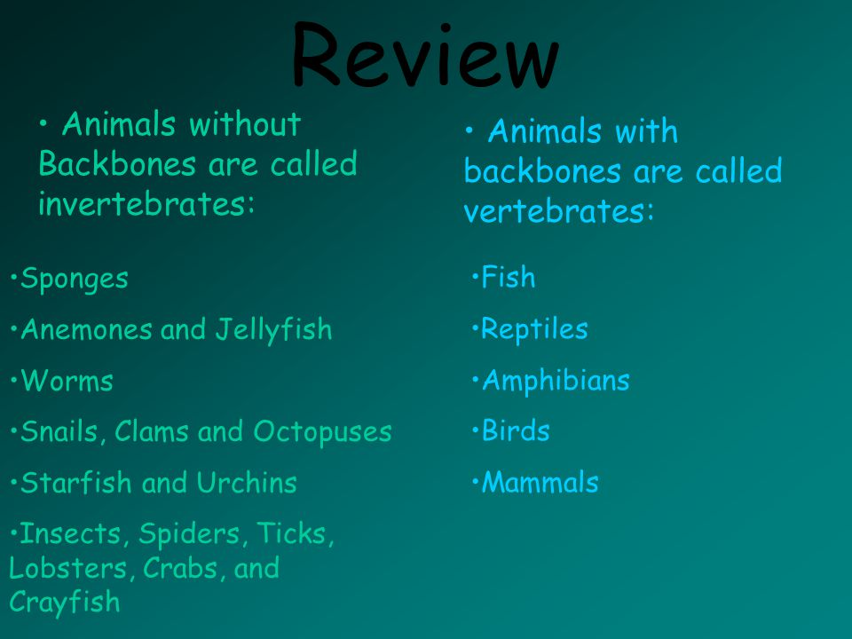 Review Animals without Backbones are called invertebrates: