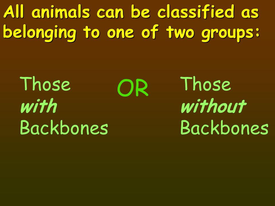 OR Those with Backbones Those without Backbones